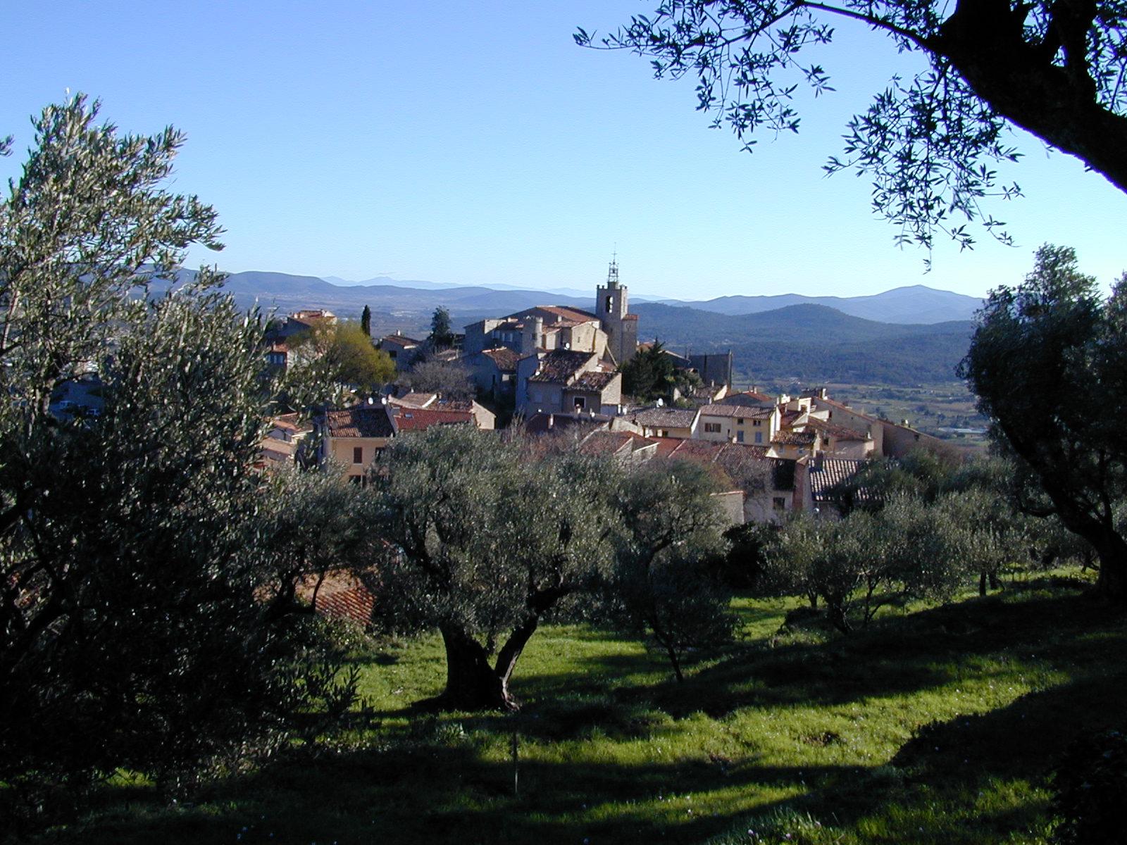 SV oliviers